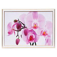 """Картина """"Розовая орхидея"""" 25х35 см (28х38см)"""