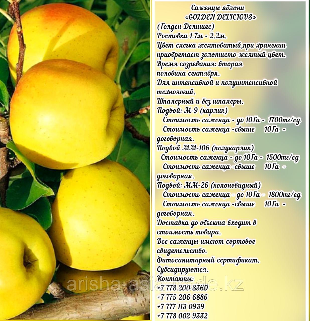 """Саженцы яблони """"Golden Delicious"""" (Голден Делишес) подвой м 9 Сербия"""
