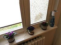 Автополив комнатных растений EASYGROW на 10 растений
