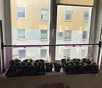 Фитолампа для комнатных растений + Штатив в Подарок