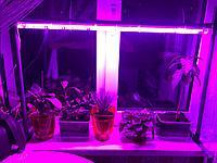 Фитолампа для растений + Штатив в Подарок