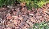 Кора сосновая, 50-100мм, 60л, фото 7