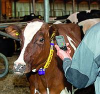 Мониторинг крупного рогатого скота