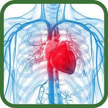 Для укрепления сердечно-сосудистой системы