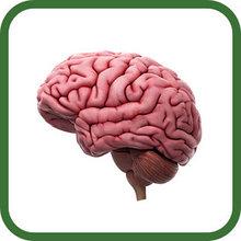 Для улучшения работы мозга