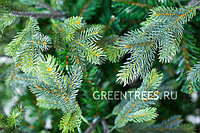Искусственная интерьерная Сказочная елка 5,5 м, фото 1