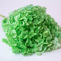 Гортензия (зеленый)