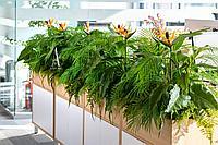 Озеленение ботаническими копиями искусственных растений