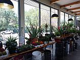 Растения комнатные в ассортименте, наличие и размеры просим уточнять, фото 5