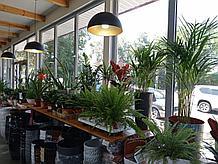 Растения комнатные в ассортименте, наличие и размеры просим уточнять