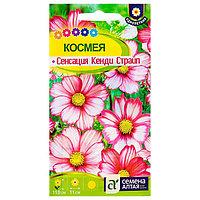 Семена цветов Космея 'Сенсация' Кенди Страйп, О, цп, 0,5 г