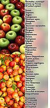 Новинка! 40 новых сортов яблонь!
