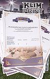 Печать сертификатов,заказать сертификаты,дизайн сертификата, фото 3