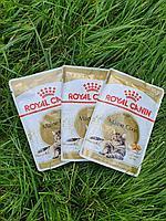 ROYAL CANIN Maine Coon ( Роял Канин для кошек породы мейн-кун) в соусе, пауч 85 гр