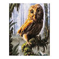 Роспись по холсту «Милая сова» по номерам с красками по 3 мл+ кисти+инстр+крепеж, 30 × 40 см