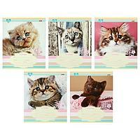 Тетрадь 12 листов в линейку 'Милый котенок', обложка мелованная бумага, блок 2, белизна 75, МИКС (комплект из