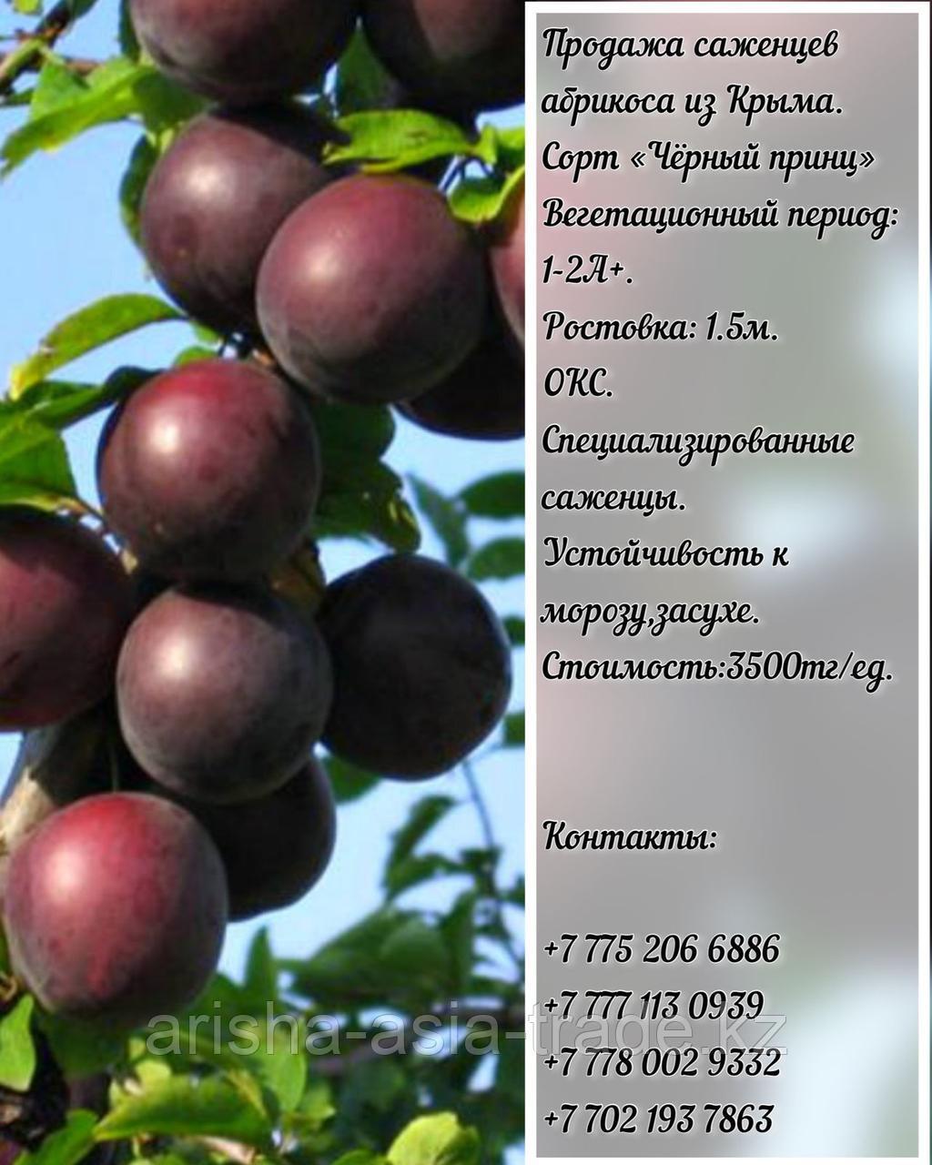 "Саженцы абрикоса ""Черный принц"" Крым"