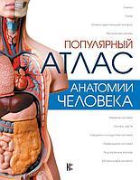 Палычева Л. Н.: Популярный атлас анатомии человека