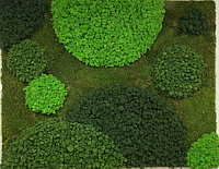 Вертикальное озеленение натуральное
