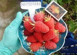 """Саженец малины """"Маравилла"""" Крым"""