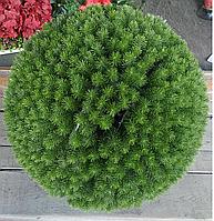 Искусственный самшит, еловый шар без кашпо, D 40 см