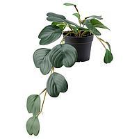 Искусственное растение ФЕЙКА в горшке, д/дома/улицы подвесной/ Пеперомия9 см ИКЕА, IKEA