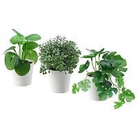 Искусственное растение в горшке ФЕЙКА 3шт, д/дома/улицы зеленый 6 см ИКЕА, IKEA