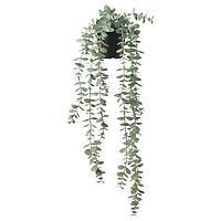 Искусственное растение в горшке ФЕЙКА д/дома/улицы подвесной/эвкалипт ИКЕА, IKEA