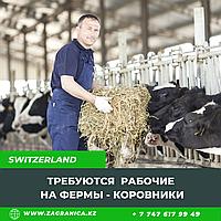 Требуются рабочие на ферму в коровники / Швейцария