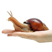 Муцин улитки (Snail mucin)