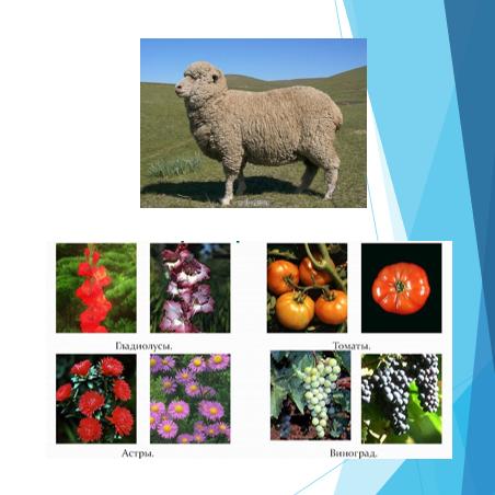 Plant breeders rights (PBR) in Kazakhstan