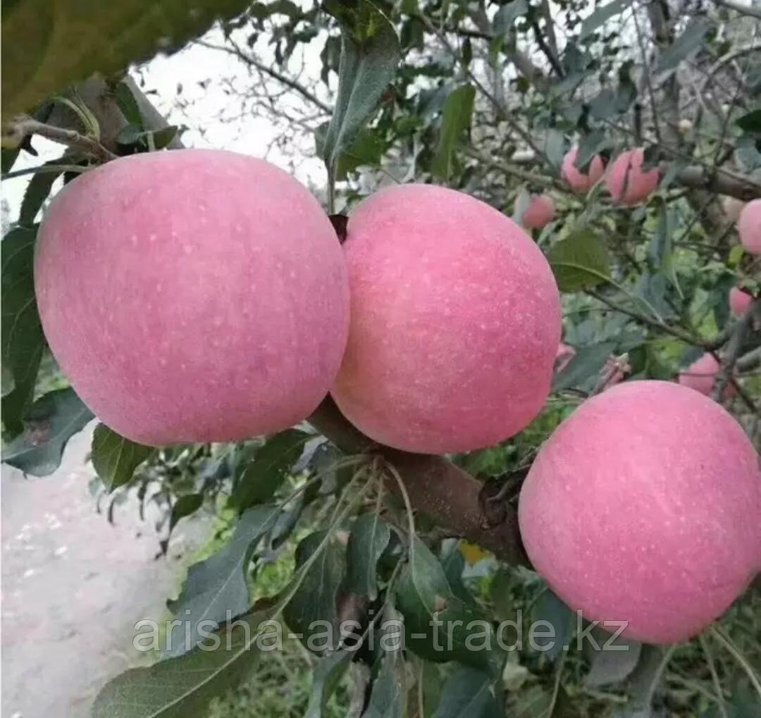 """Саженец яблони """"Розовое"""" Китай"""