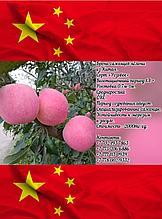 Саженцы яблони из Китая!