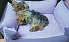 Лежанка для маленьких собак голубой