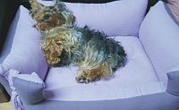 Лежанка для маленьких собак голубой, фото 1