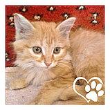 Котята в хорошие руки, фото 4