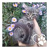 Котята в хорошие руки, фото 5