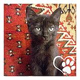 Котята в хорошие руки, фото 6