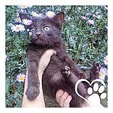 Котята в хорошие руки, фото 3