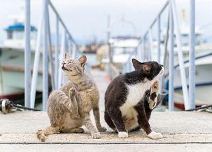 Средства от блох, клещей и др. насекомых для кошек