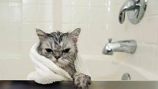 Средства для мытья кошек