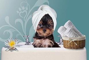 Средства для мытья собак