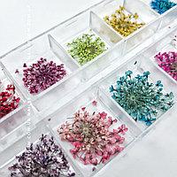Сухоцветы для дизайна. Набор #2