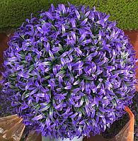 Искусственный самшит, шар (фиолетовый) без кашпо, D34 см, фото 1