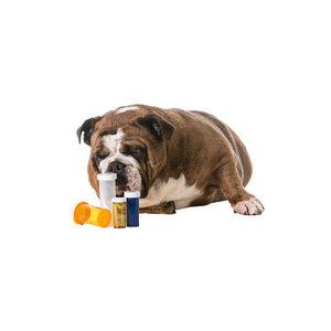 антигистаминные ветеринарные препараты