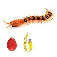 Innovation: Радиоуправляемая игрушка Сороконожка на пульте управления, оранжево-черная