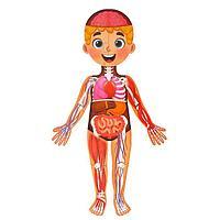 Набор «Моё тело»: мегапазл с обучающей книгой