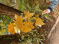 Листья для осеннего декора