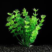 Растение искусственное аквариумное зеленое 3*13 см