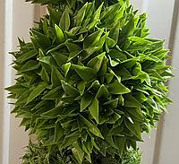 Искусственный самшит, шар (крупные листья) без кашпо, D50 см